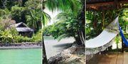 Den billigaste paradisön du kan hyra i vinter heter Tropical Island Cove Airbnb/Tropical Island Cove