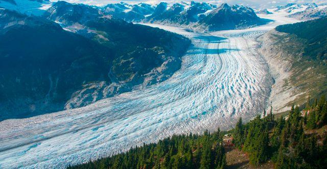 Klinakliniglaciären i Kanada.  Brian Menounos / TT NYHETSBYRÅN