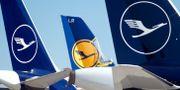 Lufthansa-flygplan parkerade på flygplatsen i tyska Frankfurt.  RALPH ORLOWSKI / TT NYHETSBYRÅN
