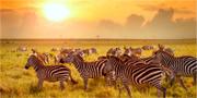 Masai Mara är själva sinnebilden av den afrikanska vildmarken. Thinkstock.