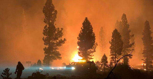 Bootleg-branden i Oregon, USA.  TT NYHETSBYRÅN