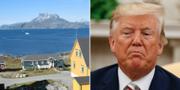 Grönland t.v. Donald Trump t.h. TT