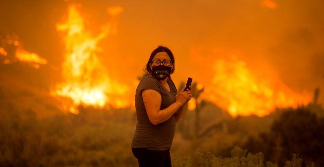Bobcat-branden förstörde Juniper Hill i fredags/Arkivbild.  Ringo H.W. Chiu / TT NYHETSBYRÅN
