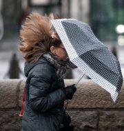 Arkivbild. Kvinna med paraply.  Johan Nilsson/TT / TT NYHETSBYRÅN