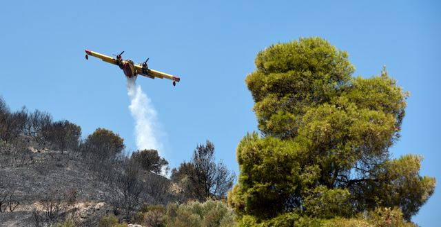 Flygplan släpper vatten över branddrabbat område.  Andreas Alexopoulos / TT NYHETSBYRÅN