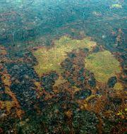 Brända områden i Amazonas i Brasilien.  LULA SAMPAIO / AFP
