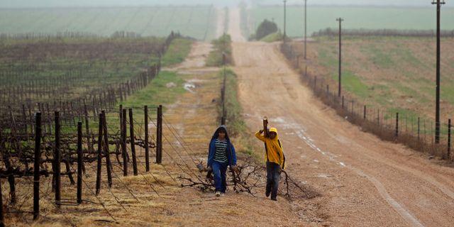 Unga pojkar vid en farm i Riebeek West i Sydafrika.  Schalk van Zuydam / TT / NTB Scanpix