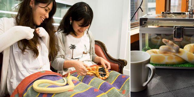 På Tokyos nya kafé kan du gosa med 35 ormar i 20 olika skepnader. animalcafes.com