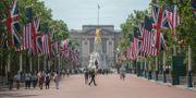 The Mall upp mot Buckingham Palace har utsmyckats inför besöket. David Mirzoeff / TT NYHETSBYRÅN
