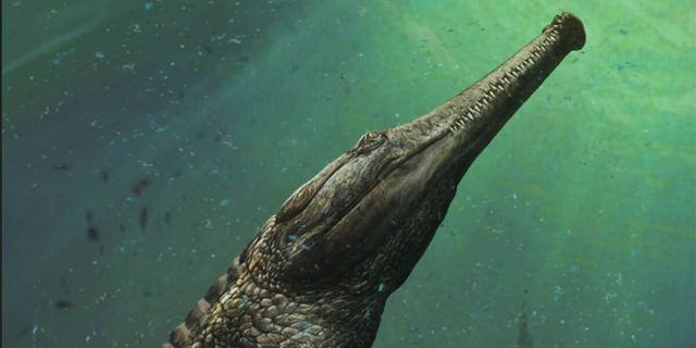 Kan krokodilen lyfta kollapsad ekonomi