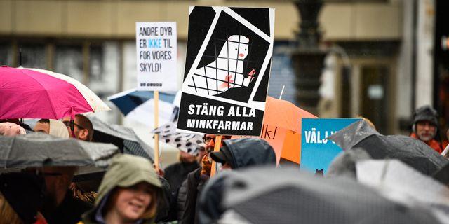 """Arkivbild. Djurrättsalliansen arrangerar djurrättsmarsch under parollen """"för djurens frihet"""" i Malmö.  Emil Langvad/TT / TT NYHETSBYRÅN"""