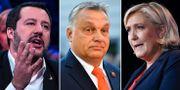 Italiens Matteo Salvini, Ungerns Viktor Orbán och Frankrikes Marine Le Pen. TT