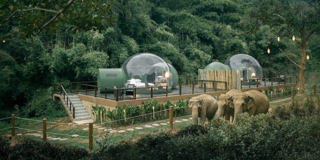 Vakna upp bland elefanter i norra Thailand. Anantara Golden Triangles Elephant Camp & Resort