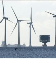 Vattenfalls vindkraftpark Lillgrund. TT