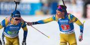 Svenska laget. Matthias Schrader / TT NYHETSBYRÅN