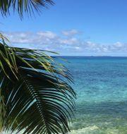 Arkivbild: Fiji.  Lisa Abrahamsso/TT / TT NYHETSBYRÅN