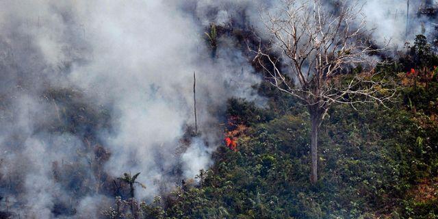 Delstaten Rondônia. CARL DE SOUZA / AFP