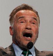 Arnold Schwarzenegger under sitt tal på klimatmötet i Katowice Czarek Sokolowski / TT NYHETSBYRÅN/ NTB Scanpix