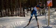 Tove Alexandersson under en tävling i skidorientering 2017. VICTOR LUNDMARK / BILDBYRÅN