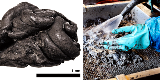 T.v Det 5700 år gamla tuggummit. T.h: arkivbild.  TT