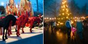 Bilder från Skansens julmarknad. TT