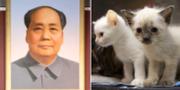 Mao Zedong/Kattungar. TT