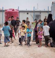 Kvinnor och barn i lägret Al-hol i Syrien. Baderkhan Ahmad / TT NYHETSBYRÅN
