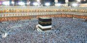 Ett vanligt år vallfärdar mer än två miljoner muslimer till Mecka och helgedomen Kaba vid moskén Masjid-ul-Haram. Hassan Ammar / TT NYHETSBYRÅN