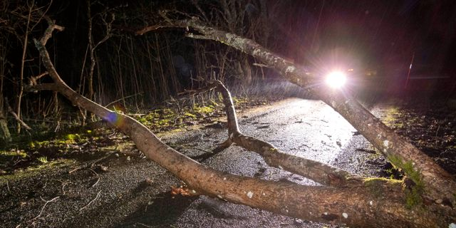 Stormen rev ner träd över vägarna. Johan Nilsson/TT / TT NYHETSBYRÅN