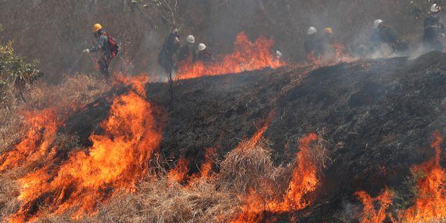 Brandmän arbetar med en brand i Chiquitaniaskogen i Bolivia.  Juan Karita / TT NYHETSBYRÅN