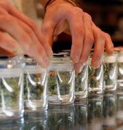Marijuana i Los Angeles MARIO ANZUONI / TT NYHETSBYRÅN
