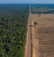 Skog som skövlats för att ge plats åt en sojafält.  Leo Correa / TT NYHETSBYRÅN