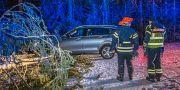En personbil har krockat med träd som fallit över vägen i Hedemora.  Niklas Hagman/TT / TT NYHETSBYRÅN
