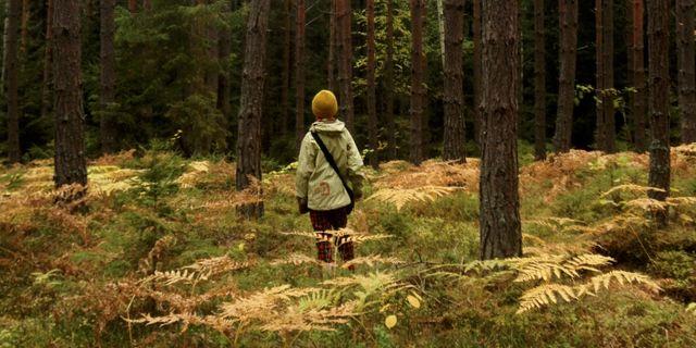 Arkivbild. Ett barn i en skog.  Petra Lindell / TT NYHETSBYRÅN