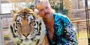 """Joseph """"Joe Exotic"""" Maldonado-Passage i Netflix succéserie """"Tiger king"""". - / TT NYHETSBYRÅN"""