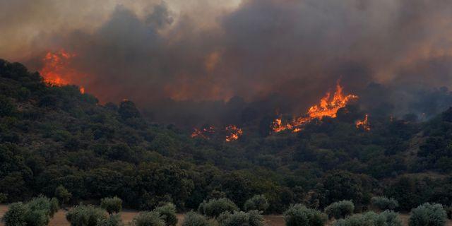 Skogsbranden i Toledo.  JUAN MEDINA / TT NYHETSBYRÅN