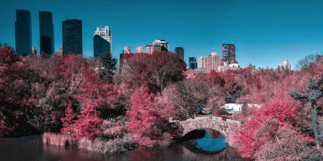 Central Park sedd av någon som har tritanopi och därmed förväxlar orange med rött. Lenstore