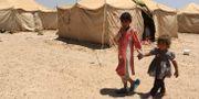 Barn från Falluja som flyttats till ett av Norge drivet läger utanför staden. AHMAD MOUSA / AFP